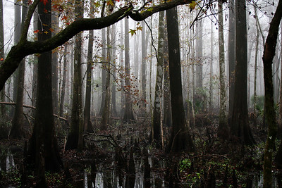 Lower Suwannee National Wildlife Refuge, FL