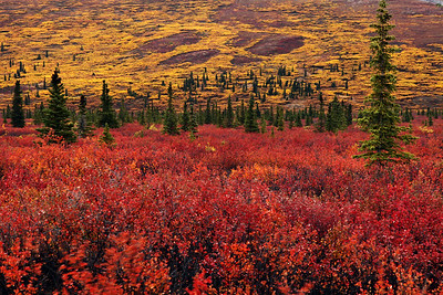 Denali National Park and Preserve, AK
