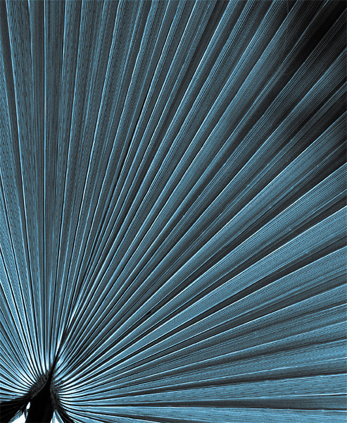 Blue Palm Frond