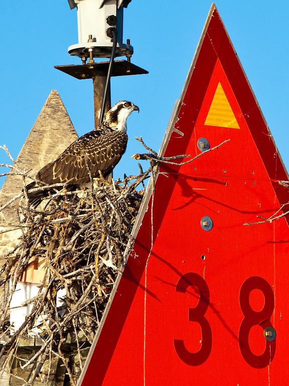 Channel Marker 38 Osprey Nest