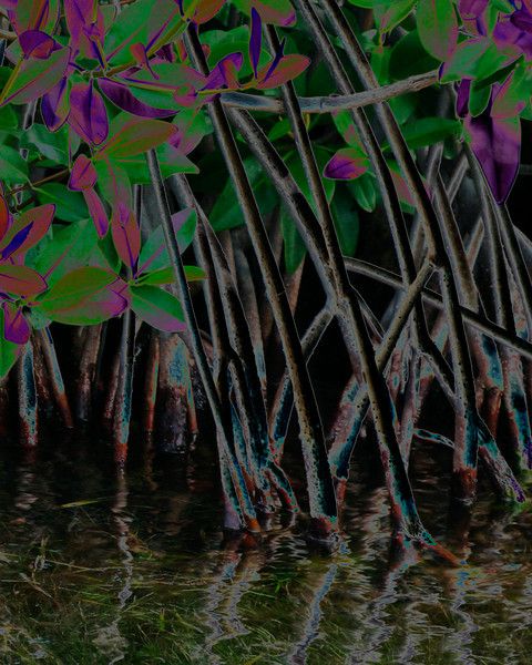 Mangrove Abstract