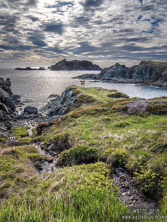 Twillingate Overlook     Photography by Wayne Heim