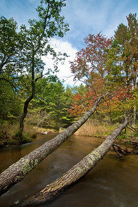 The beginning of fall on Slagle Creek in Wexford County, northwestern Michigan