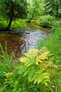 Slagle Creek in Wexford County, Michigan