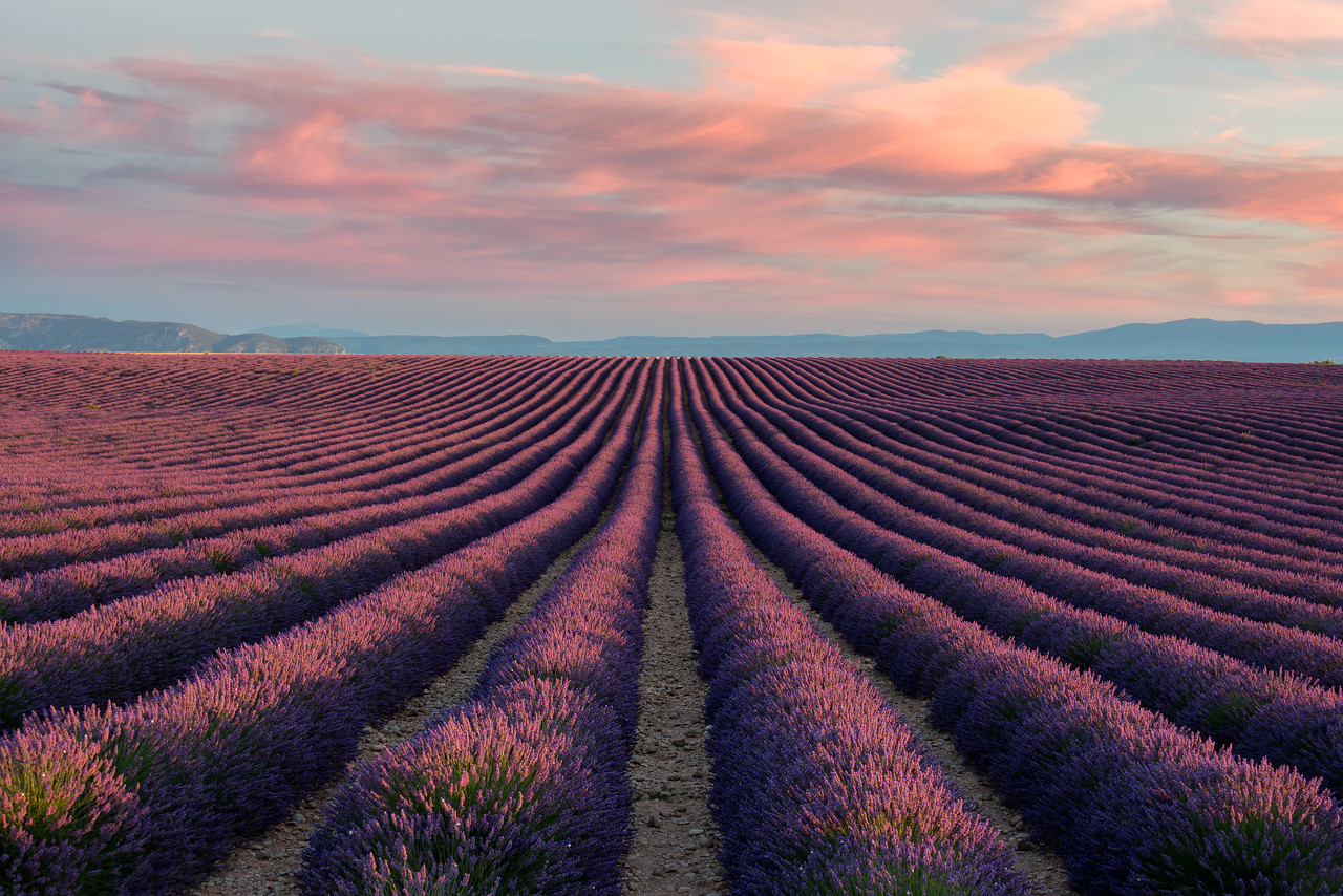 Infinity || Valensole France