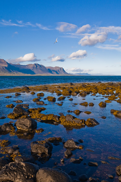 Coast at Budhir, Iceland