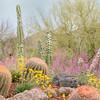 Arizona Desert Garden