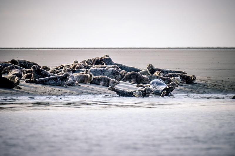Berck sur Mer © 2019 Olivier Caenen, tous droits reserves,
