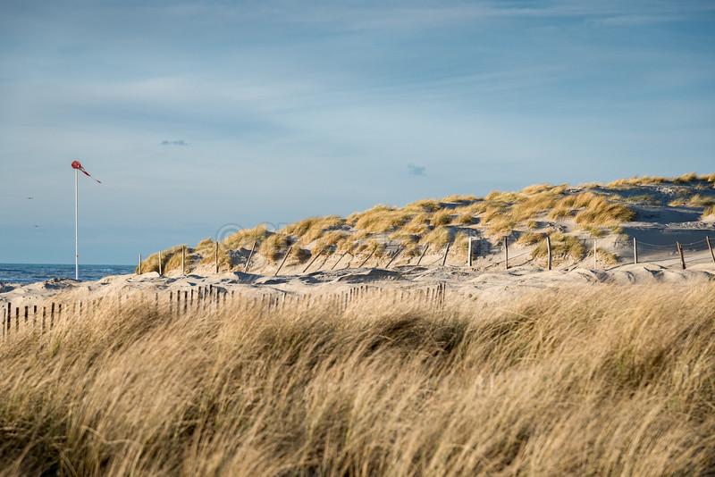 Dunes et Oyats