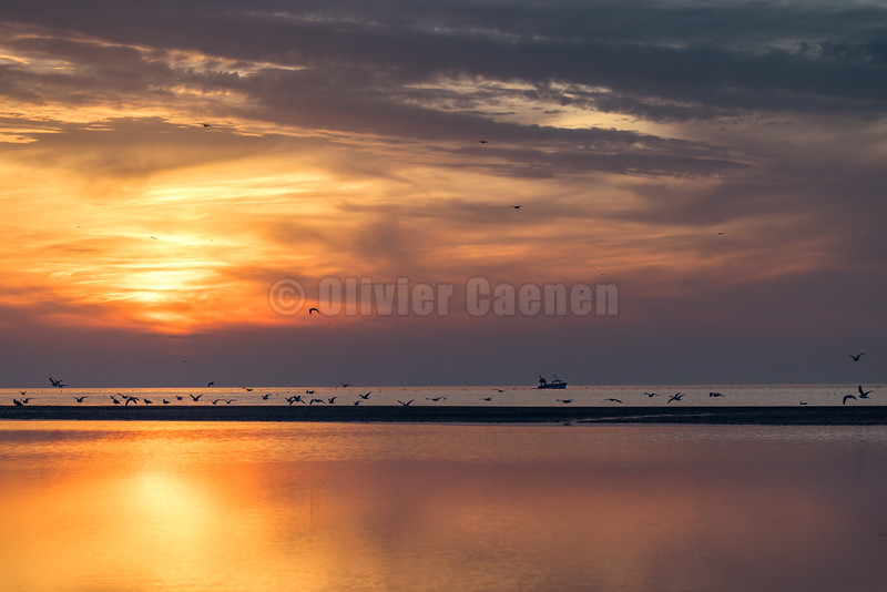 © 2020 Olivier Caenen, tous droits reserves,