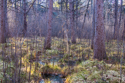 quaking bog in november