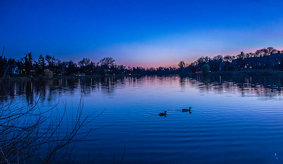 ducks at twilight