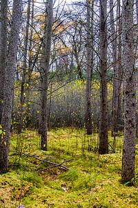 quaking bog view