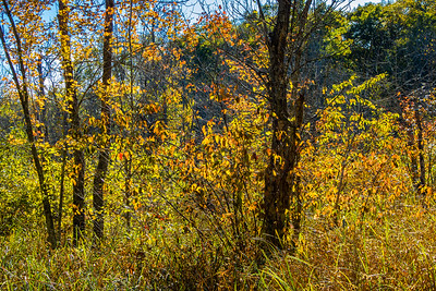 autumn day at william o'brien state park