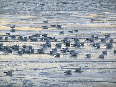 Birds on the Hudson