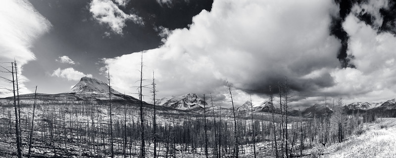 Burnt forest, Glacier National Park