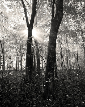Shenandoah Light