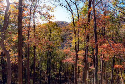 Fall Foliage and Mountain Peak