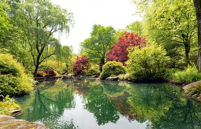 Springtime Oasis 2