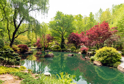 Springtime Oasis