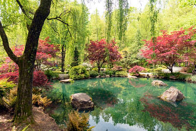 Japanese reflections