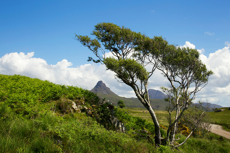 The Mountain of Stac Polly and Canisp behind. Assynt. Sutherland.