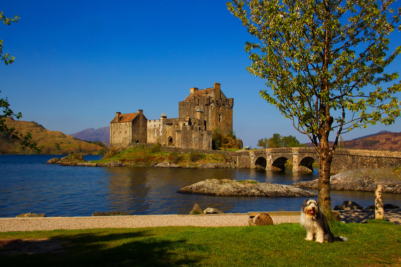 Buddy at Eilean Donan Castle. John Chapman. Accepted in the Local Press.