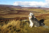 Buddy up the Gairn. Aberdeenshire. Picture in the Local Newspaper.