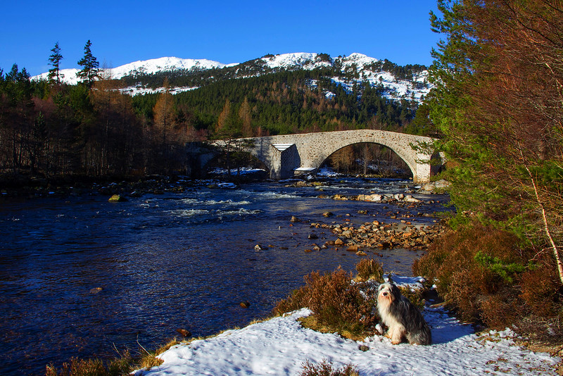 Buddy at the Invercauld Bridge. Braemar. Aberdeenshire.