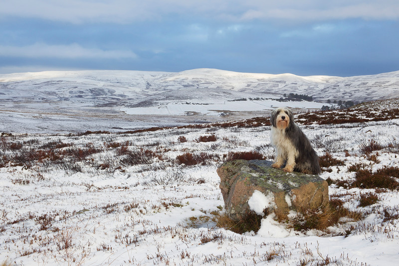 Buddy up the hills near Ballater. John Chapman. Published in the Local Newspaper.