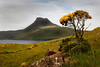 Gorse Bush in Stac Polly. John Chapman.