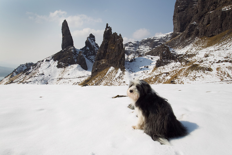 Buddy at Old Man of Storr, Skye, Scotland. Accepted in the local Newspaper.