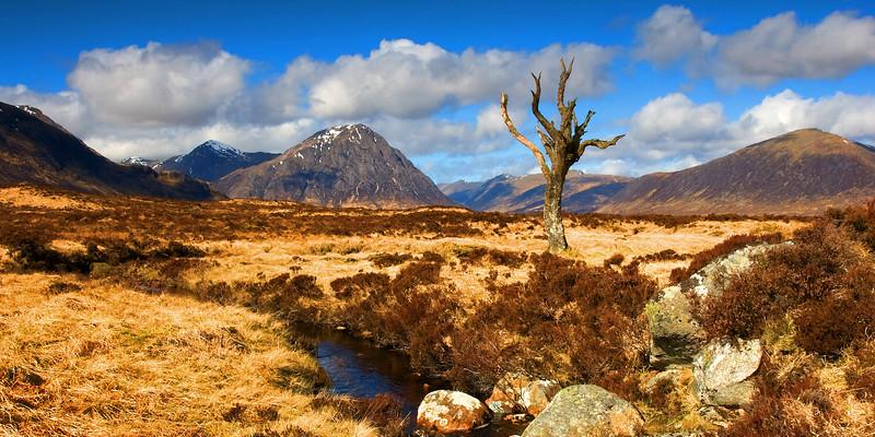 The Lonely Tree. Glencoe. John Chapman.