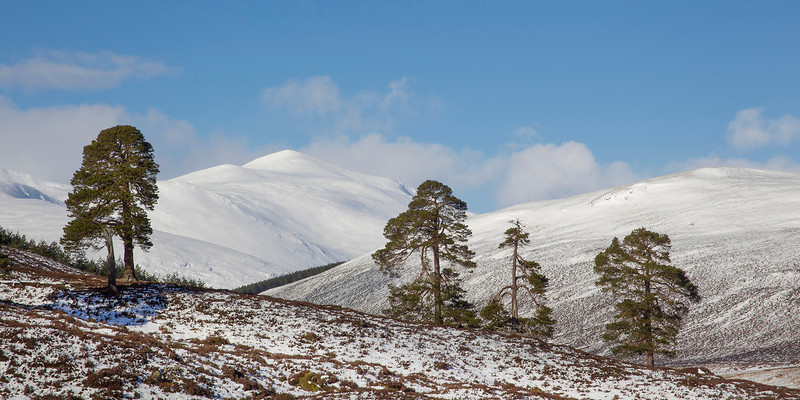The Mountain of Derry Cairngorm. Picture accepted in the Local Newspaper.
