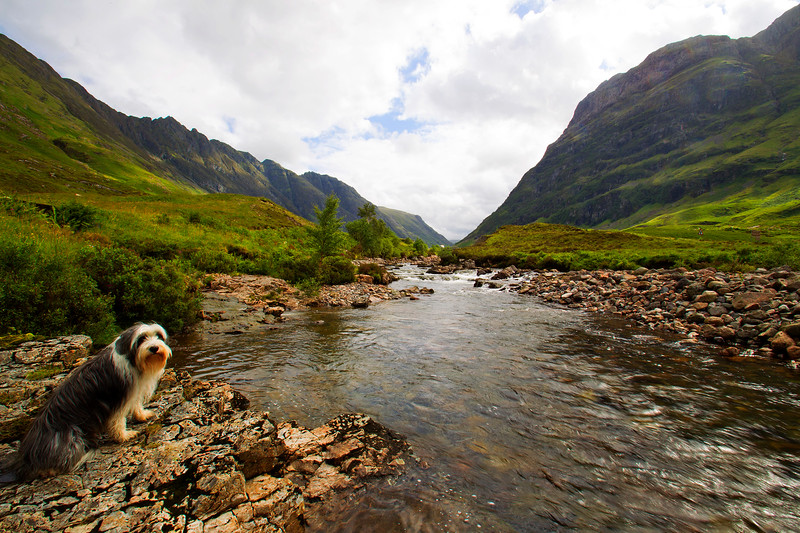 Buddy at Glencoe.
