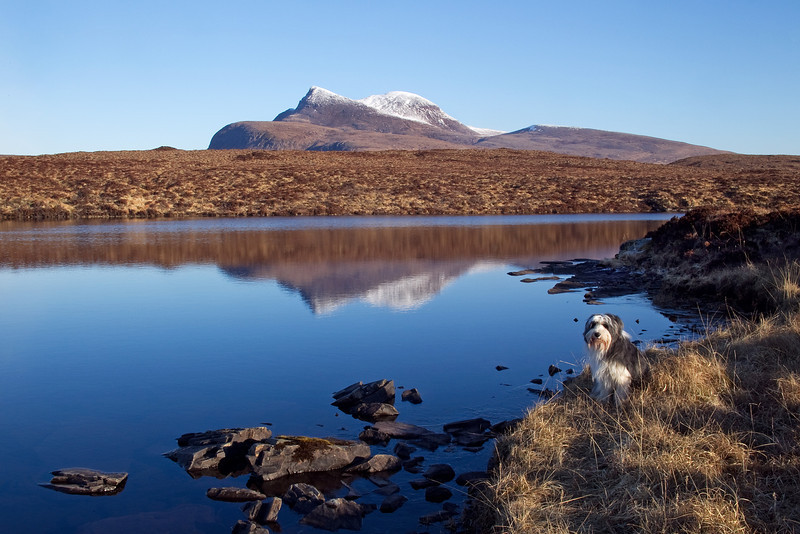 Buddy with the Mountain of Canisp behind. West Sutherland.