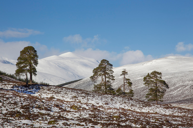 The Mountain of Derry Cairngorm.