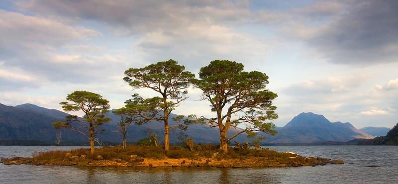 Scot Pines at Loch Maree.