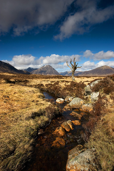 A tree with Buachaille Etive Mor behind. Glencoe.