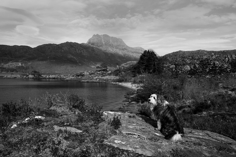Buddy looking at Loch Maree. John Chapman.