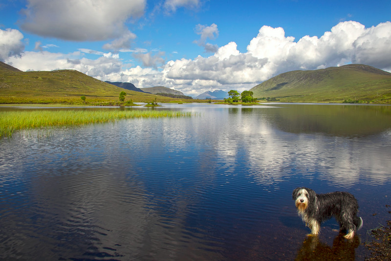 Buddy is soaking wet. Landscape near Ullapool. Accepted in the Local Newspaper.