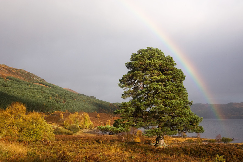 Rainbow over Tree Glen Affric.