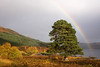 Rainbow over Tree Glen Affric.