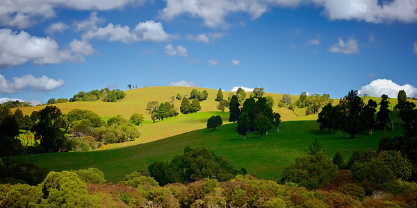Rolling Hills - Pretty as a picture rolling hills around Dorrigo New South Wales Australia, sun and shade, mature trees in grassy fields. ~WIDE VIEW~