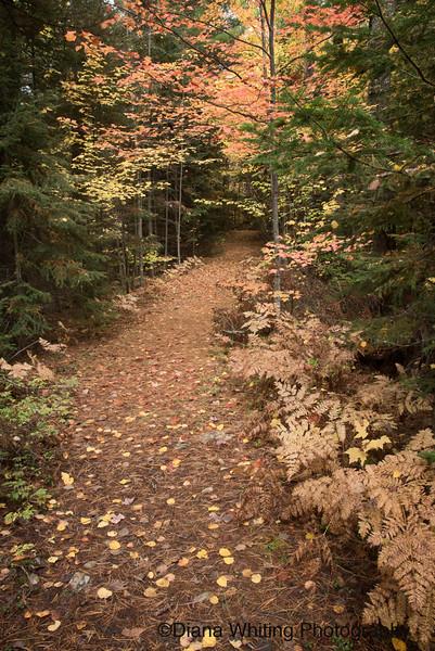 Trail Into Spring Bog
