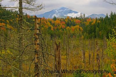 Adirondack Mountain View