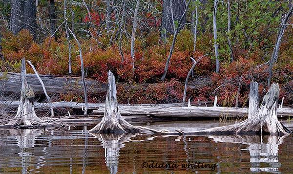 Quimbey Pond