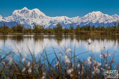Alaska Cotton
