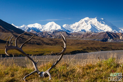 Caribou Rack with Mt. McKinley