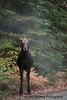 Moose Calf October
